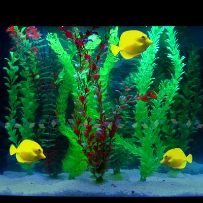 aquariumpflanzen wasserpflanzen aquarium pflanzen 7x5st ebay. Black Bedroom Furniture Sets. Home Design Ideas