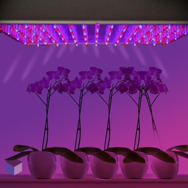 Lampara de led para cultivar plantas por por ebay y for Leds para cultivo interior